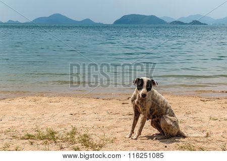A Stray Dog On The Beach