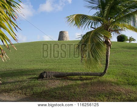 Sugar Mill And A Crooked Palm Tree