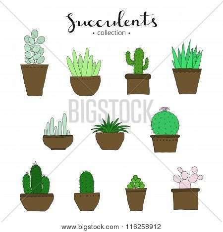 Different doodle succulents.