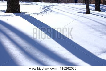 Tree shadow on snow