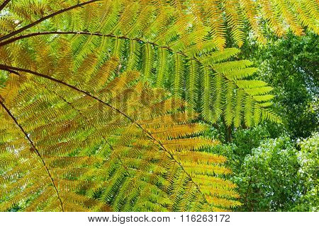 Background Of The Tree Fern Leaves