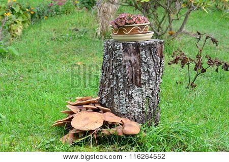 Mushrooms, Southern Bohemia