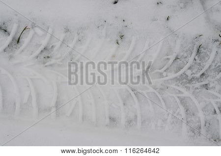 Tire Tracks In The Snow