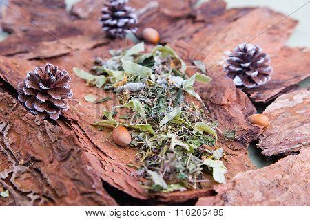 Herbal linden tea on the tree bark