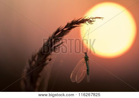 Caught Insects On The Web At Sunrise
