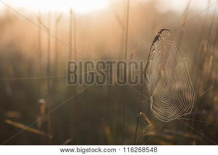Cobweb Early Morning In Autumn Meadow
