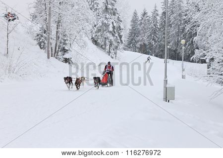Sled Dog Race, dog team during the competition on the winter road