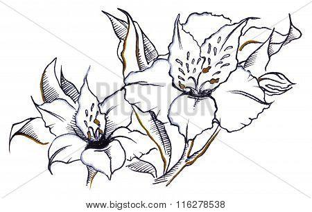 Monochrome Pair Flower Alstroemeria Composition Line Art
