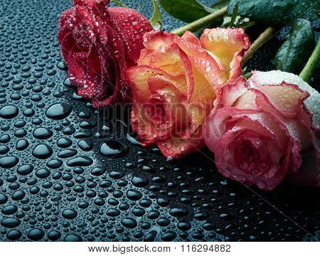 Three roses on black wet background with waterdrops