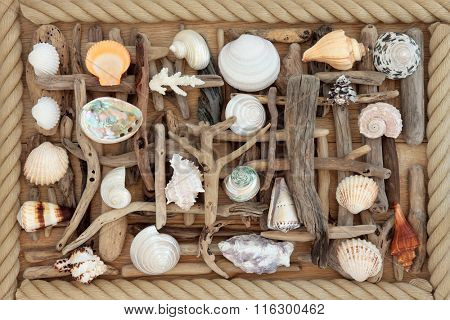 Driftwood and sea shell abstract background on oak wood surrounded by rope.