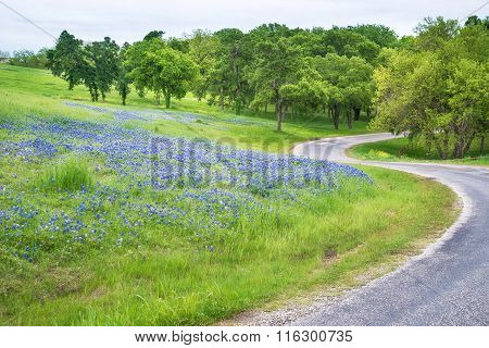 Texas Bluebonnet Field Along Curvy Country Road