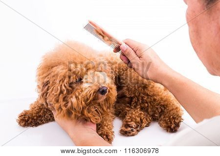 Groomer Combing Dog, With De-tangled Fur Stuck On Comb