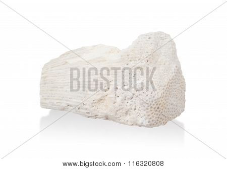White Coral Stone  Isolated