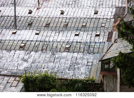 Glass Roofs Of The Old Greenhouses