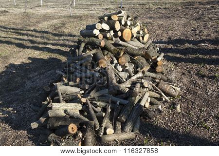 Pile Of Cut Logs In The Garden