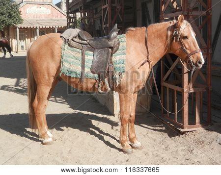 Saddled Horse In Sunshine