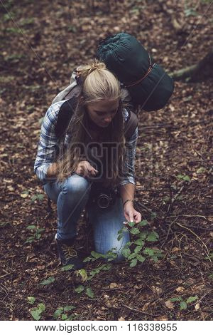 Backpacking Woman Touching Shrub On Forest Ground.