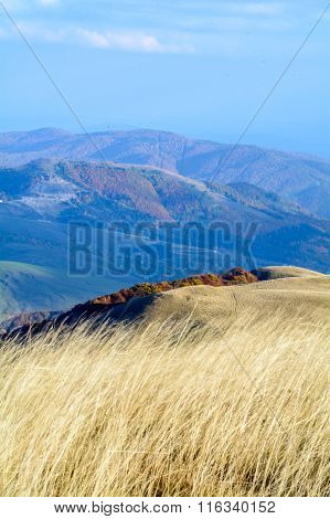 Dry Grass With Blue Sky Behind. Vertical Perspective Of Dry Grass Yellow Background With Mountain Pa