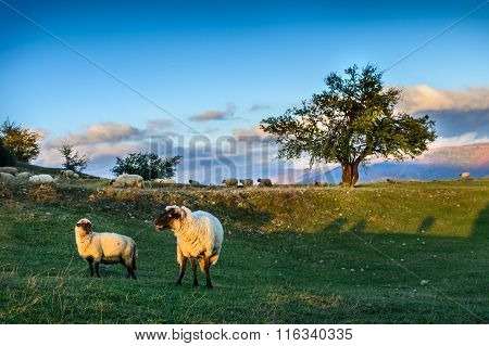 Herd Of Sheep On Beautiful Mountain Meadow. Gorgeous Background With Sheep, Autumnal Trees, Green Gr