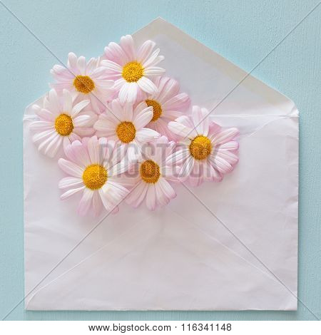 Daisies and envelope