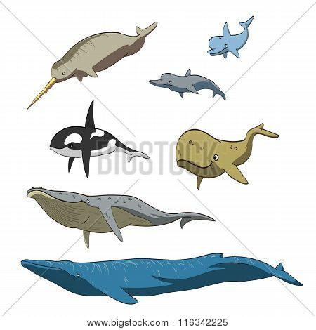 Cartoon whales collection