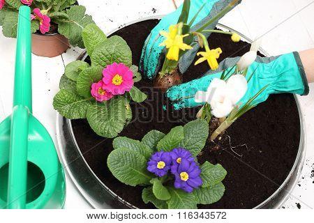 Spring planting pot plants