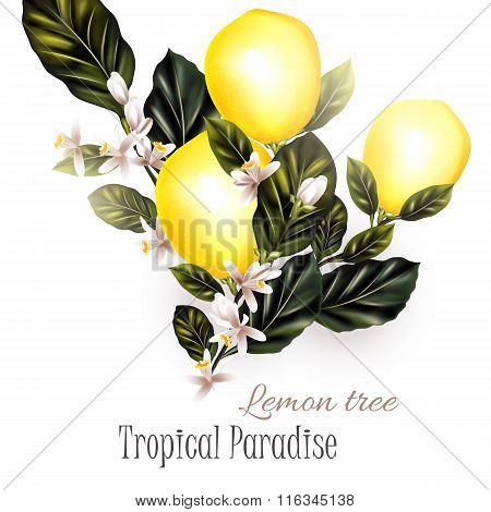 Illustration With Realistic Vector Lemon On A Blooming Branches
