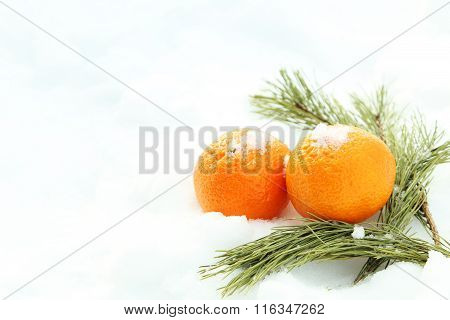 Ripe Mandarins With Fir-tree Branch On The White Snow
