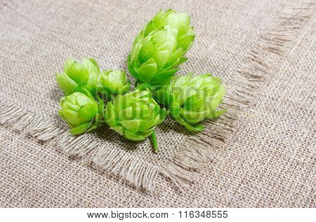 Fresh Hops - Closeup