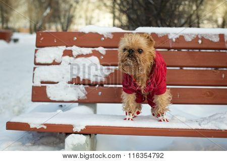 Dog Walks In The Winter