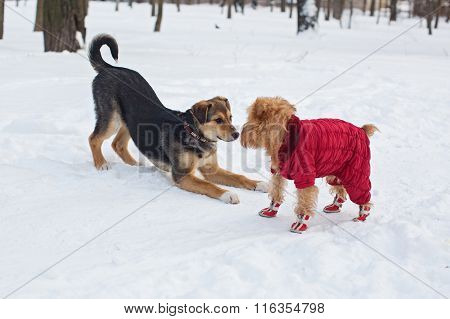 Two Dogs On A Walk In Winter