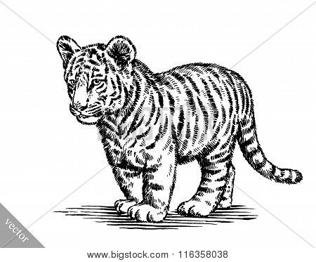 engrave ink draw tiger illustration