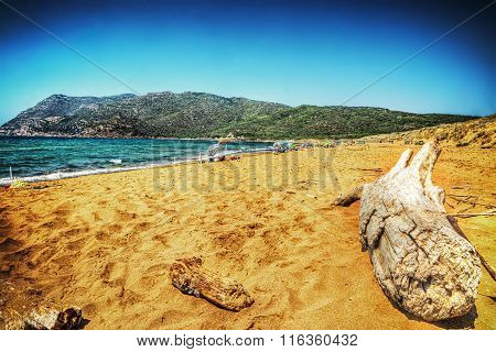 Driftwood By The Shore In Porto Ferro