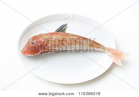 Tub Gurnard Raw Fish On  A Plate