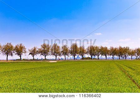 Alley In Rural Landscape In Springtime