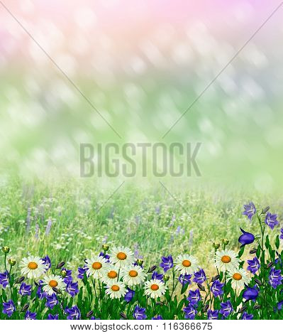Summer Landscape With Wildflowers.