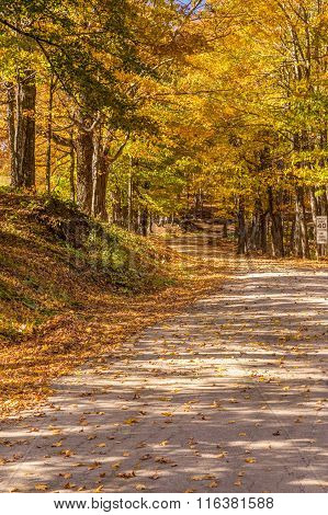 Country Road In Fall, Vermont.