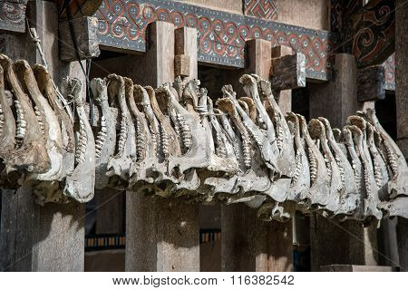 Buffalo Jaws Hanging At Tongkonan Traditional Houses In Tana Toraja