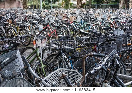 A Sea Of Parked Bicycles