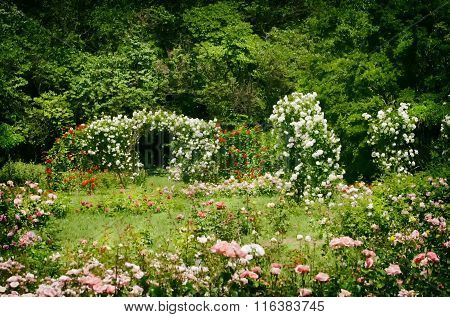 Rose Spring Garden