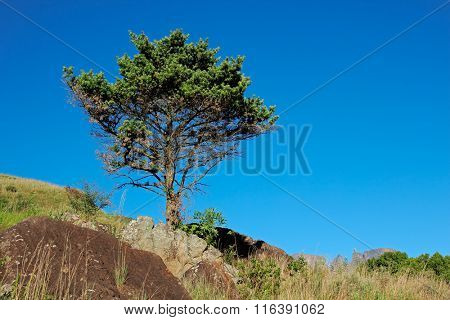 African landscape with a tree on a rocky ridge against a blue sky