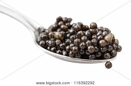 Spoon With Black Sturgeon Caviar Close Up Isolated