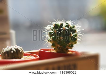 Cactus in the pot on wood container