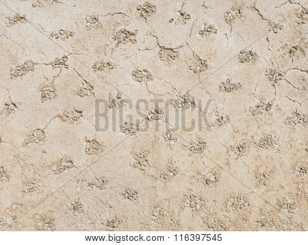 Decorative Wall Made Of Plaster And Gravel