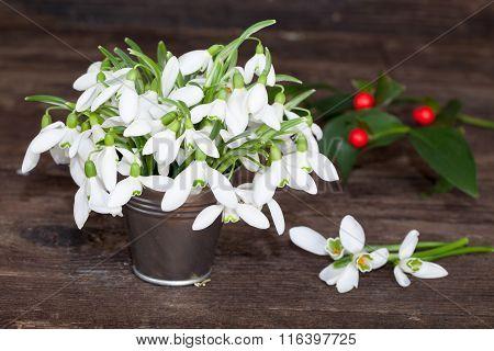 Snowdrops in little tin bucket