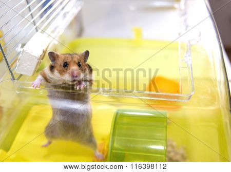 Hamster Gets Out Of His Cage