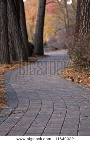 Paver Path Through The Trees In Autumn