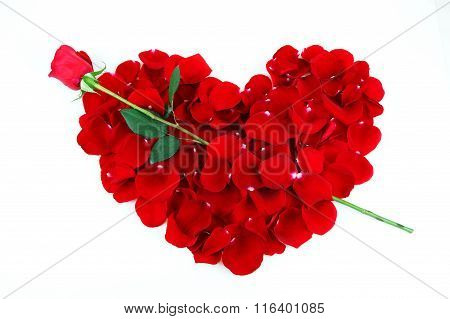 rose petals red heart with single rose as arrow