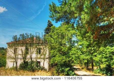 Old House In Burgos Forest