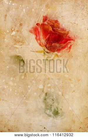 Frozen Beautiful Red Rose Flower